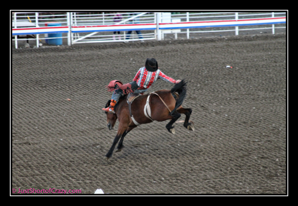 Cody Rodeo horse broncs