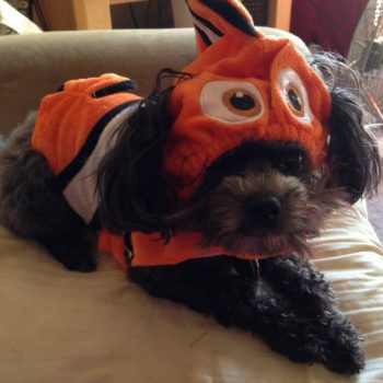 Finding Nemo Pet Costume from Pet Smart