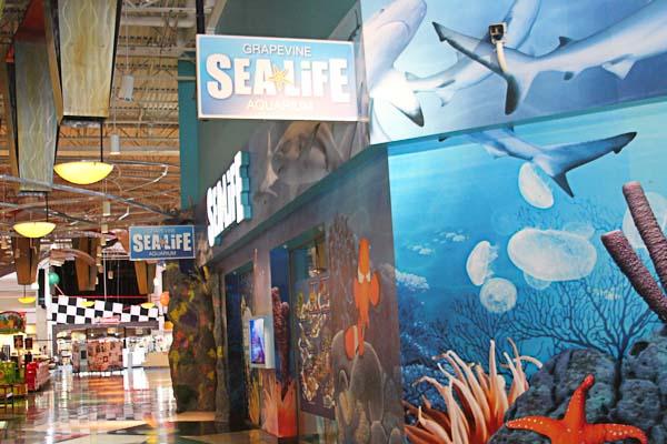 Under The Sea At Sea Life Aquarium Grapevine Tx Just