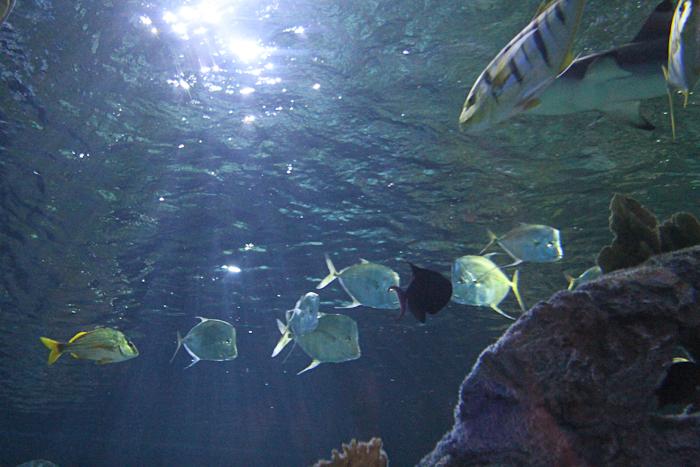 Under The Sea At Sea Life Aquarium Grapevine Tx Just Short Of Crazy