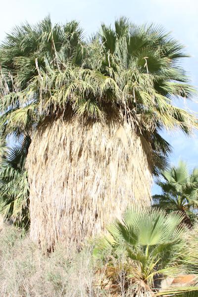 palm springs desert tours