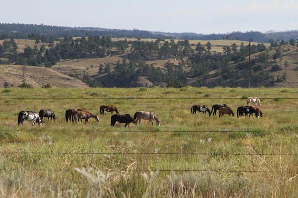 14 Things To Do In South Dakota