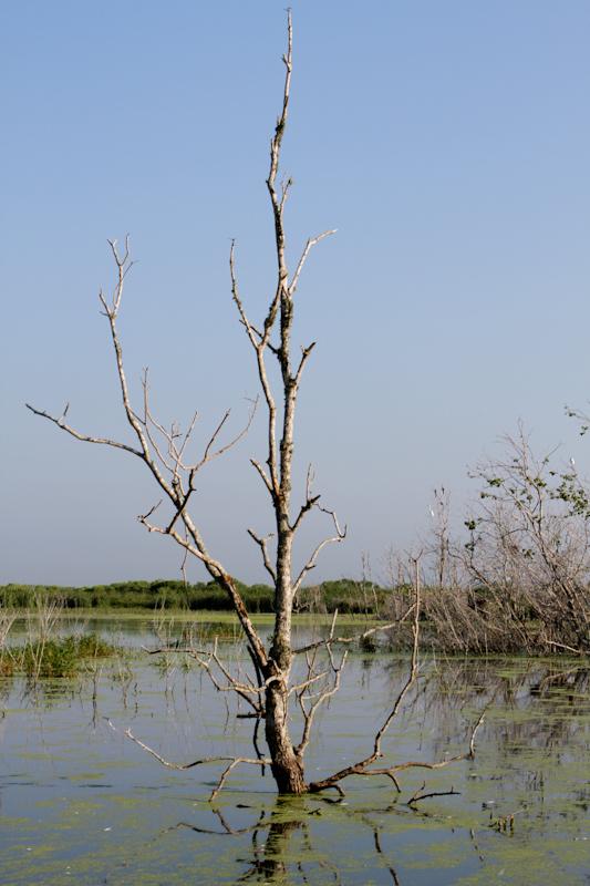 Birding Louisiana