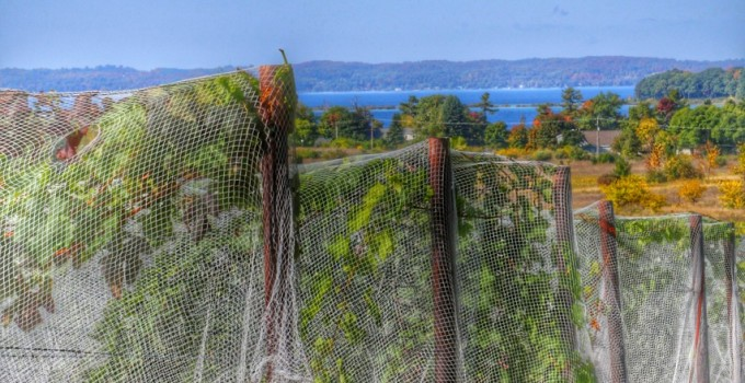 A Day On Old Mission Peninsula