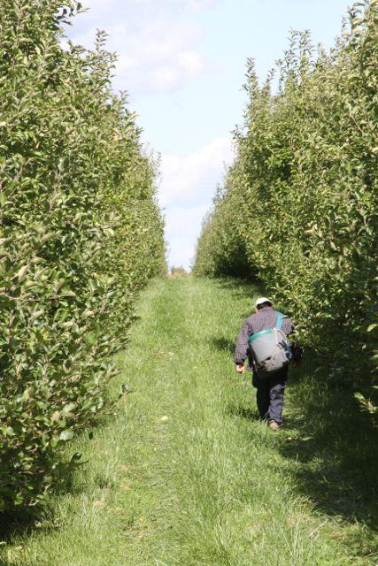 Michigan Apple
