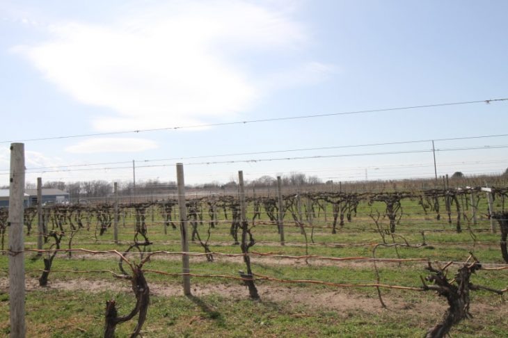 Southwest Michigan Wine