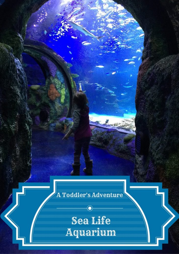 taking a toddler to sea life aquarium