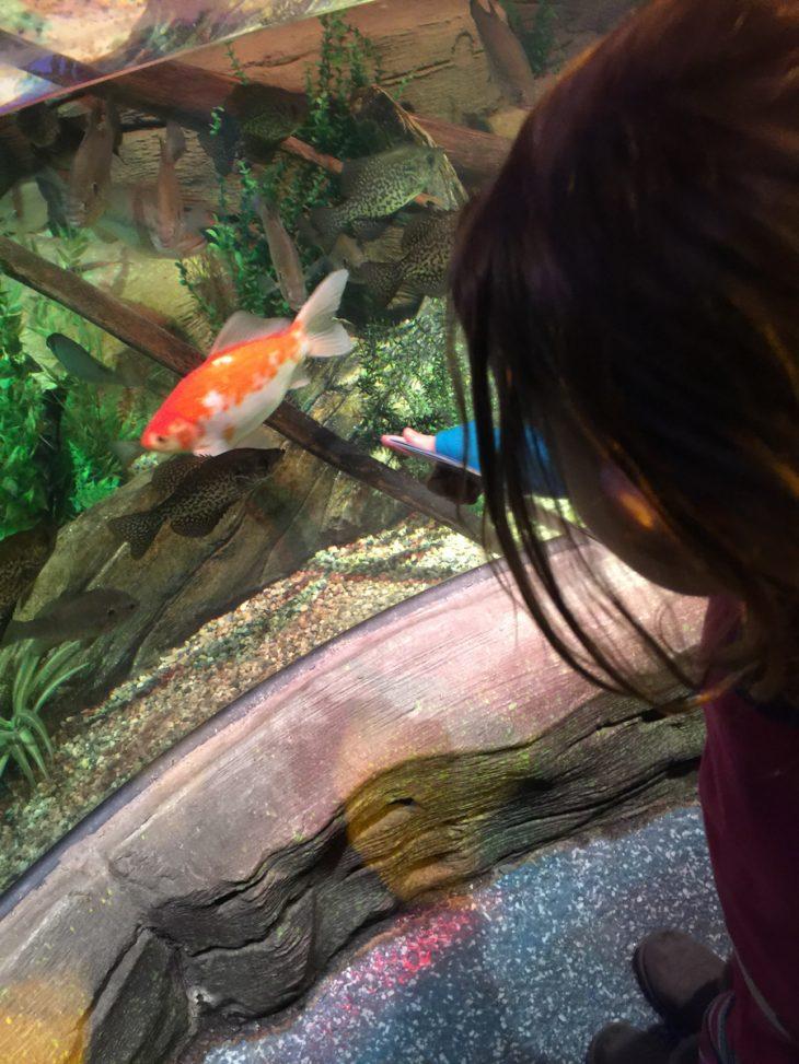 a toddler meets fishes and sharks at sea life aquarium