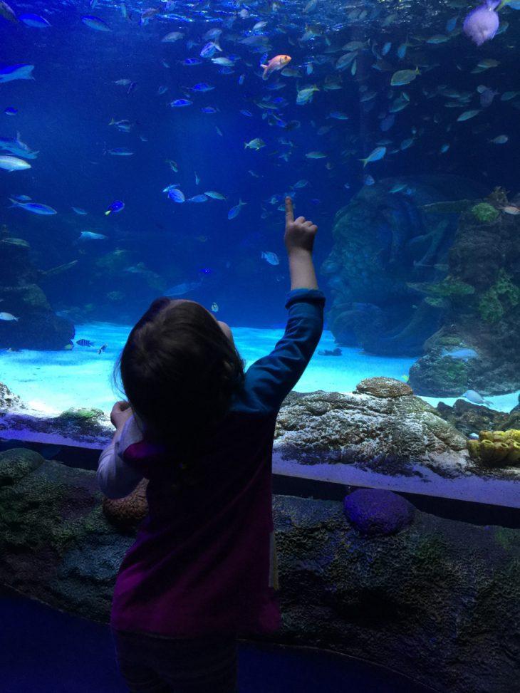 Sea life aquarium adventure
