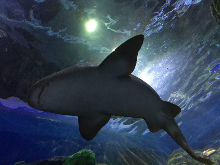 sharks at sea life aquarium