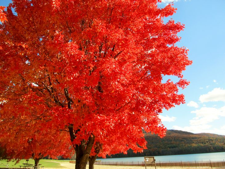 Take A Fall Color Tour Across The Mid-Atlantic States