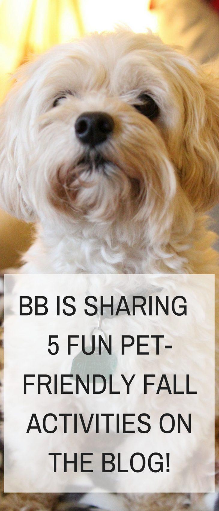 5 Fun Fall Pet Friendly Activities