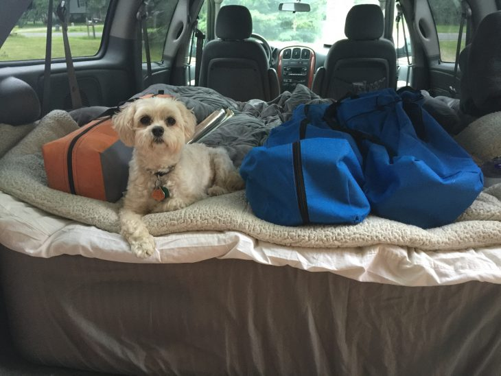 5 Fun Fall Pet Friendly Activities5