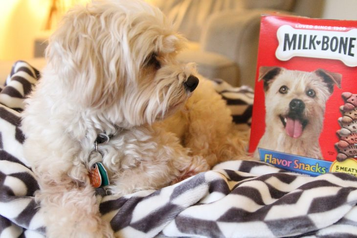 Show the world how much more your dog is by creating a really cool GIF. Right now Milk-Bone has a Milk-Bone Gifmaker so that you can share how your furry family member is more.
