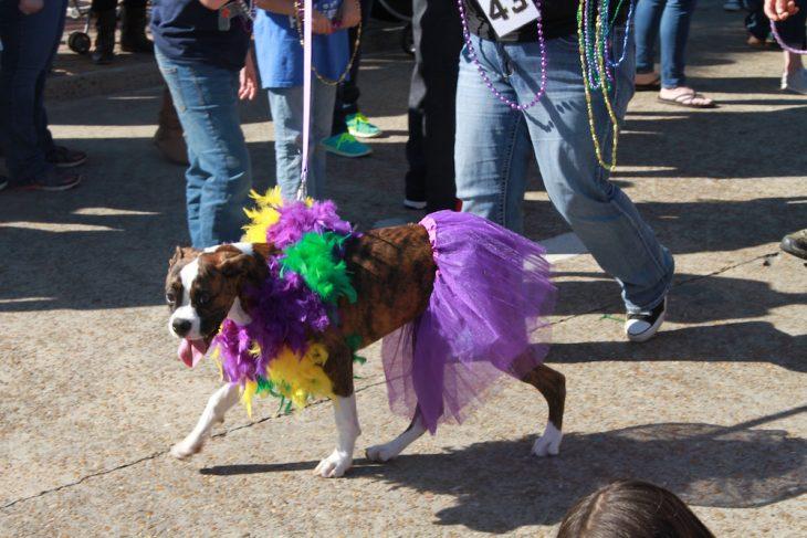 Mystical Krewe of Barkus Mardi Gras Parade 8