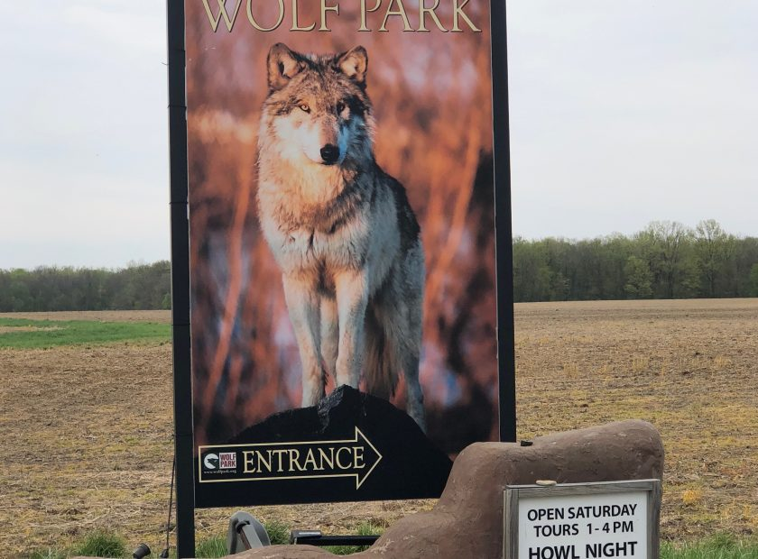Howl with the Wolves At Wolf Park