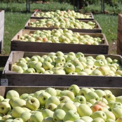 quick and easy apple recipes