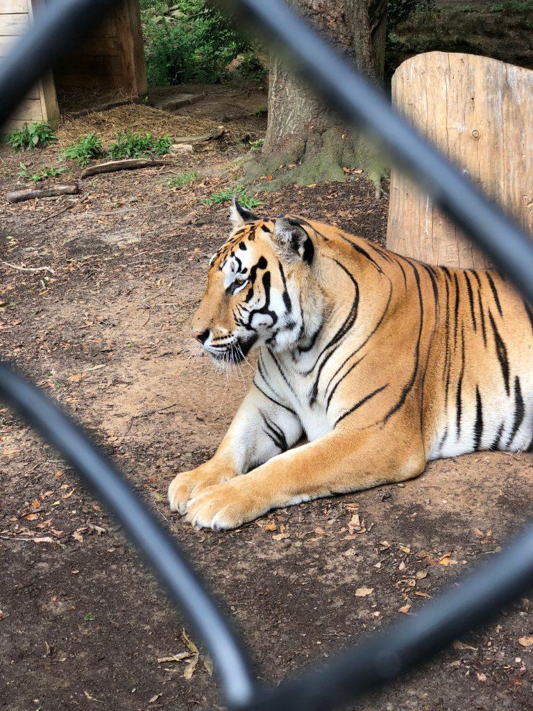 noah's art animal sanctuary