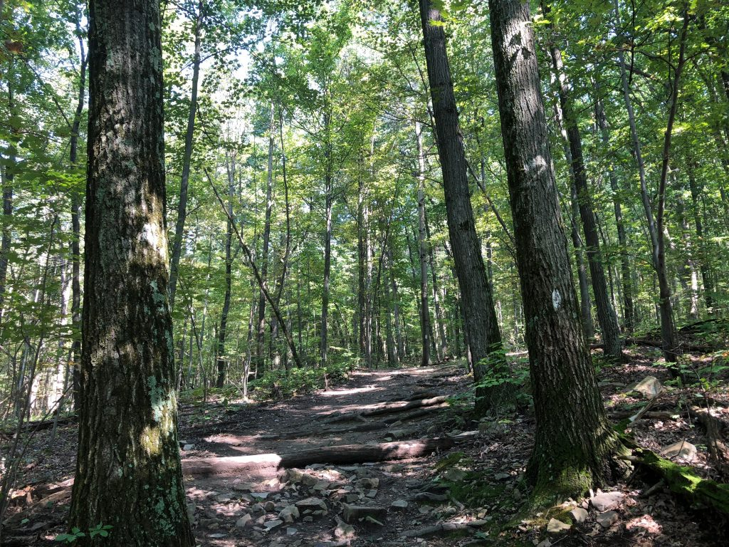 Hike Mount Nittany