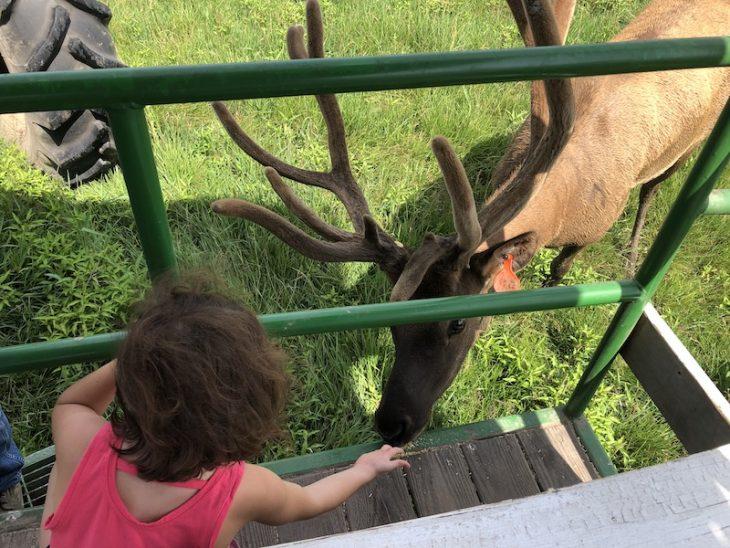 Amber Elk Ranch 1