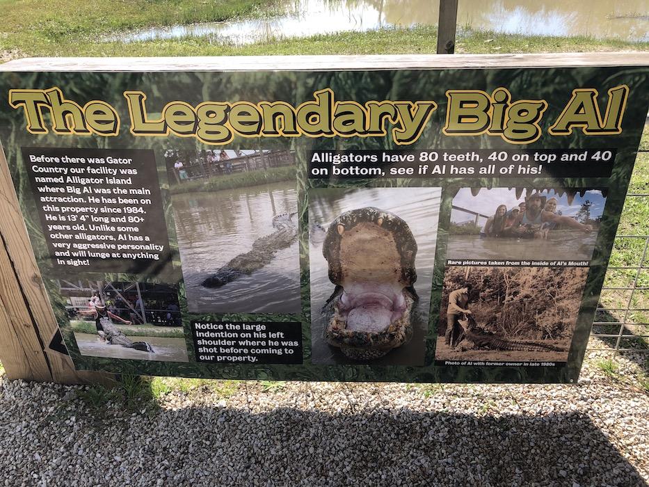 big al at gator country