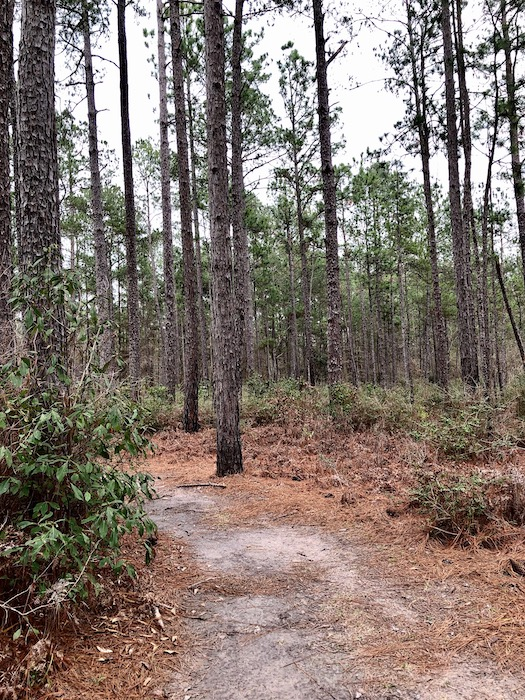 Big Thicket National Park near beaumont tx