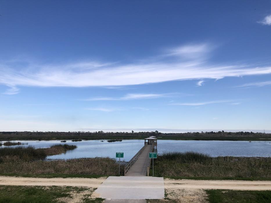 Cattail Marsh Wetlands 1