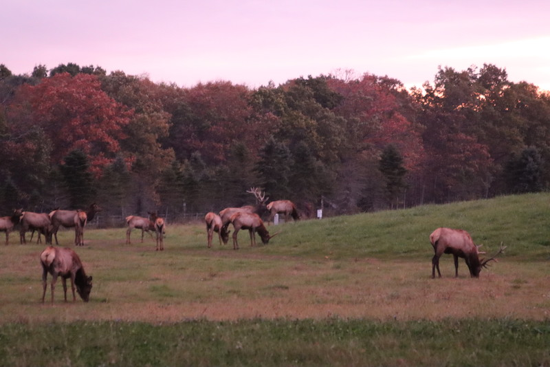 Elk Viewing 1