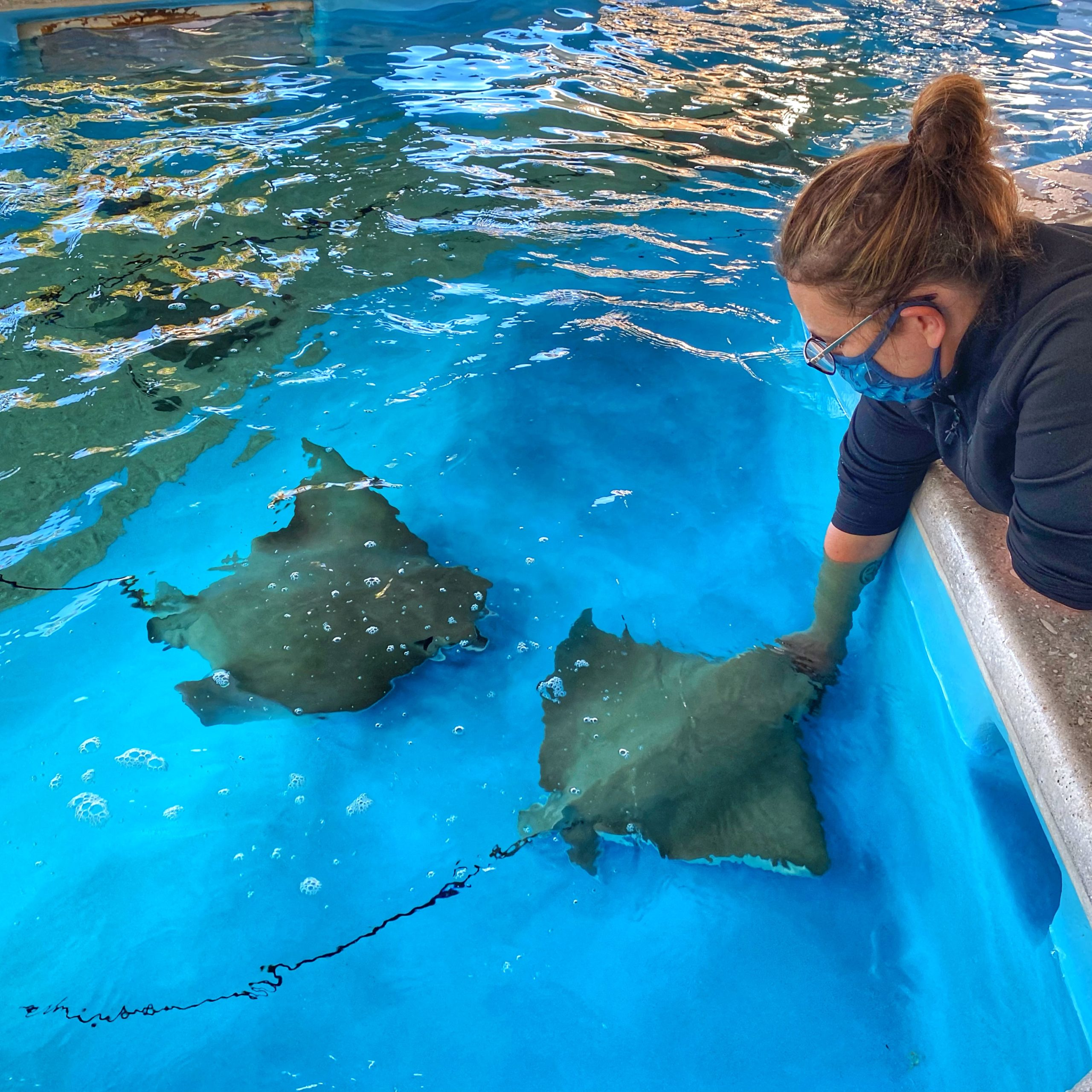 Feeding the Sting Rays at the Florida Oceanographic Society
