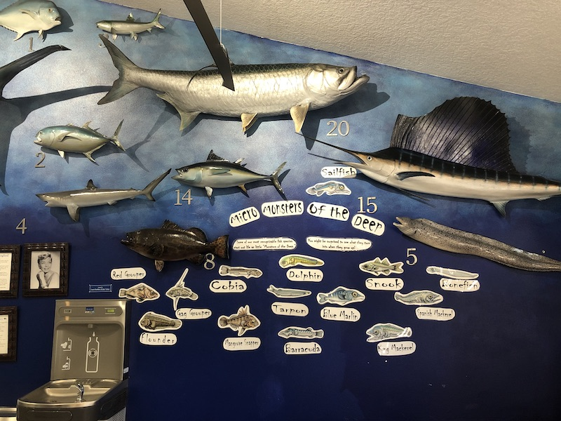 Fish Wall at the Education Center at Florida Oceanographic Society