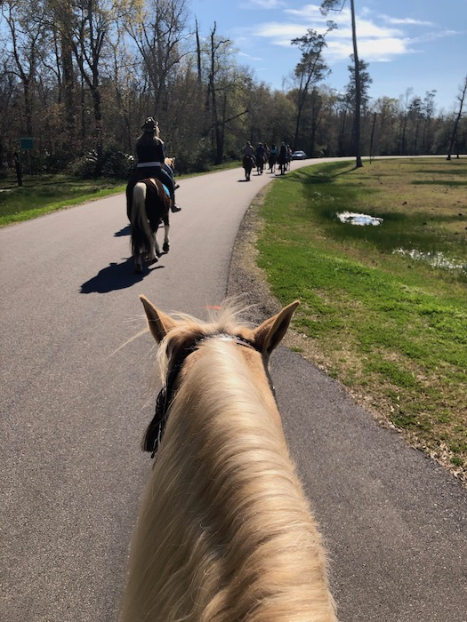 horseback ride at tyrell stables in beaumont tx