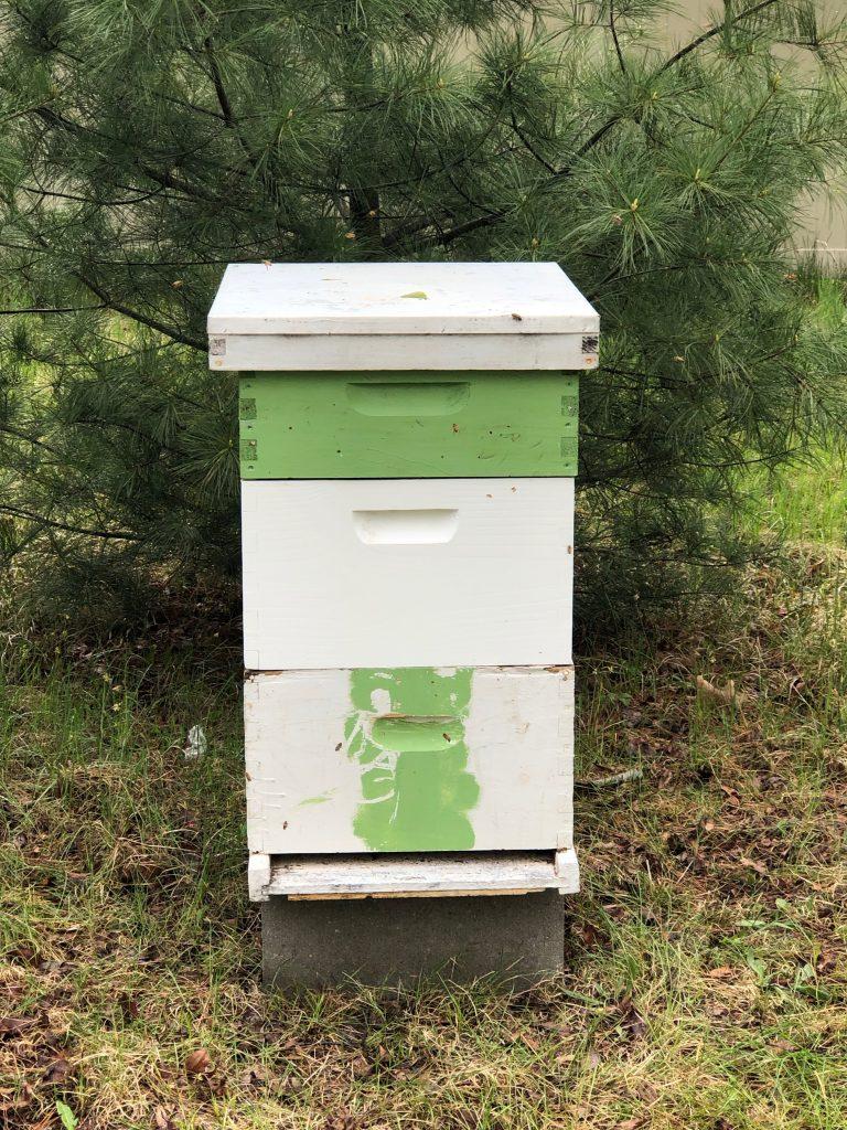 beehive set up in backyard