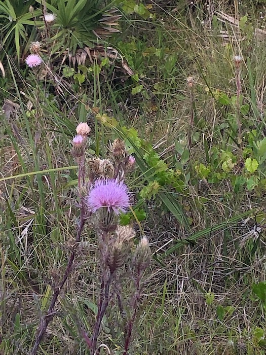 JDSP Flower