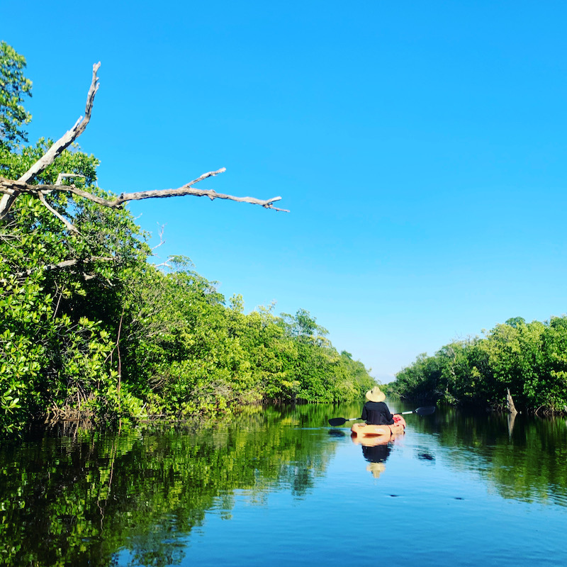 Kayak through the Mangroves in Martin County FL