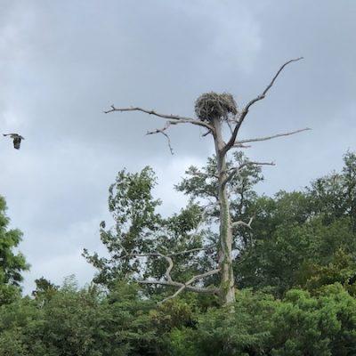 McCoy Marsh Tour bird in flight leaving nest