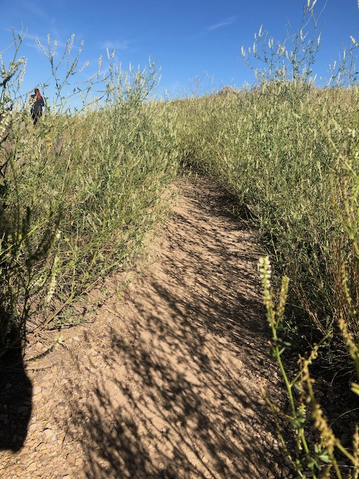 grassy and dirt trail at wind canyon