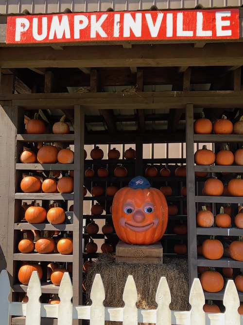 Percy the talking pumpkin at pumpkinville in western ny