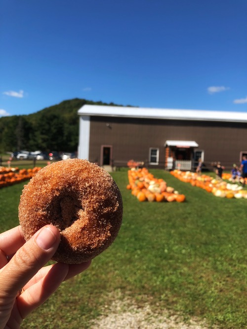 pumpkin donut fresh out of the fryer at pumpkinville in western ny
