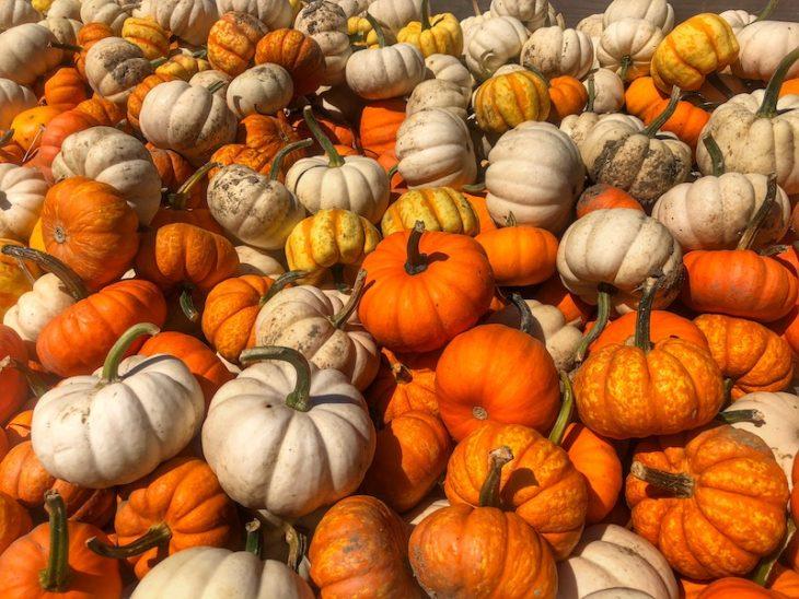 Pumpkinville fall family fun