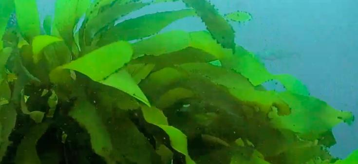 Australian Reef Cam