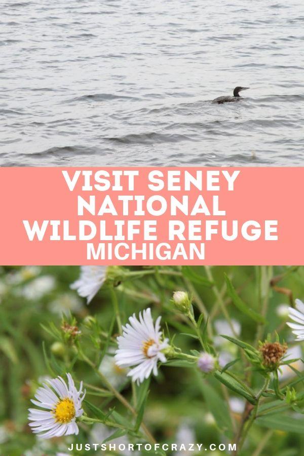 Seney national wildlife