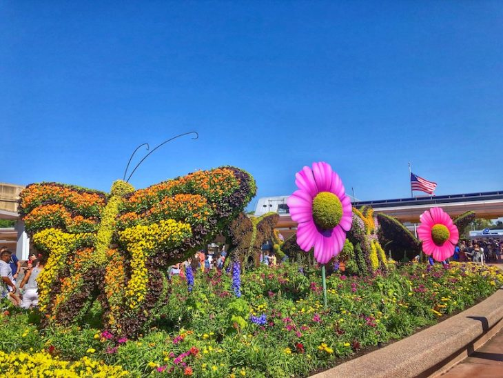 Topiary Disney Flowers Epcot Butterfly