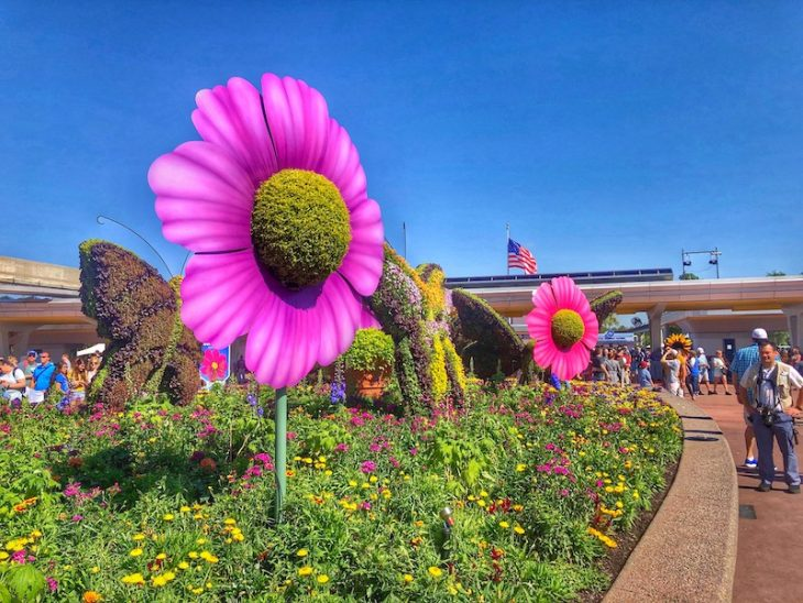 Topiary Disney Flowers Epcot Pink Flowers