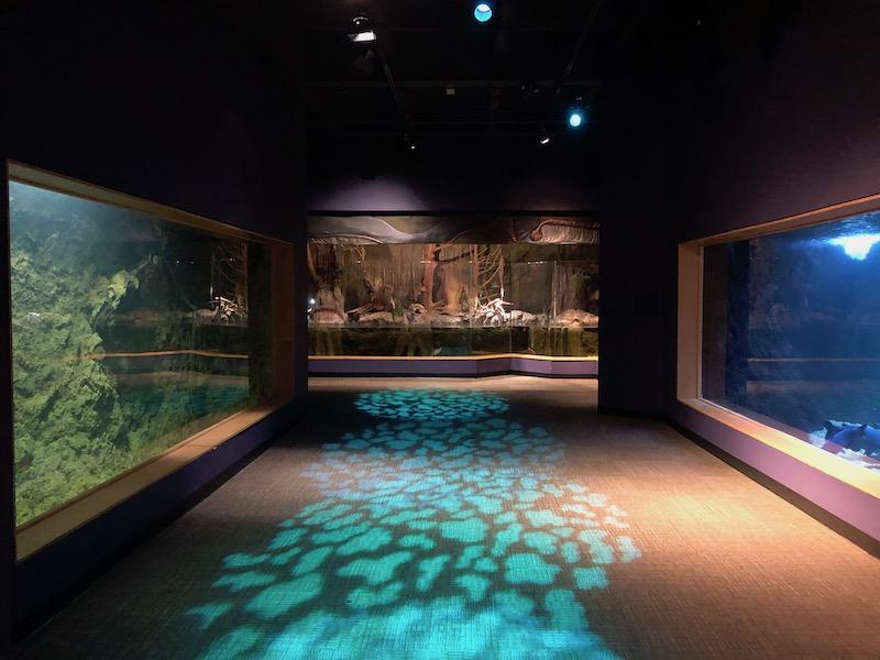 Tunica RiverPark & Museum aquarium
