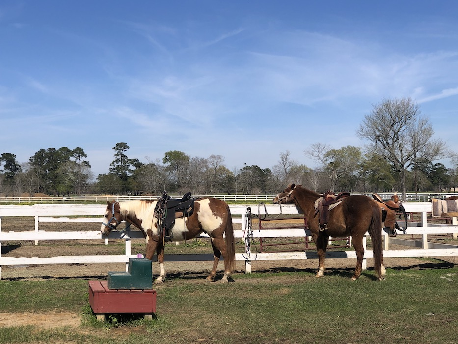 Tyrell Stables in beaumont tx