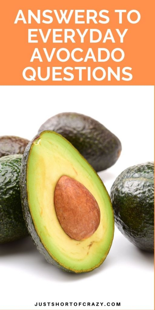 avocado questions