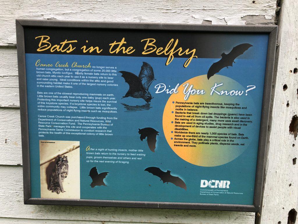 bats in the belfry canoe creek state park