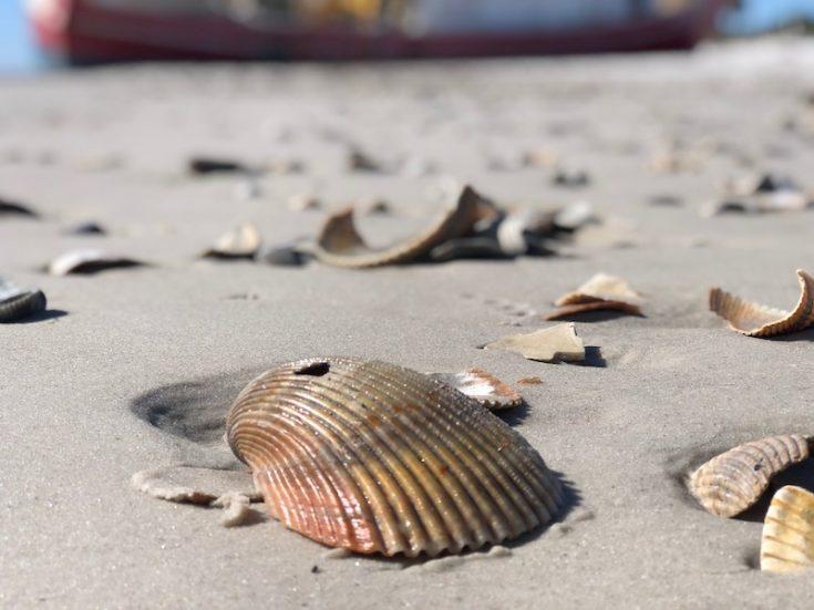 beaches port st joe