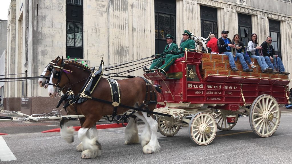 clydesdale horses mardi gras beaumont
