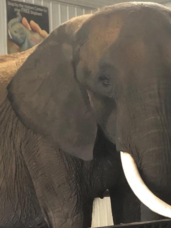 elephant experience wilstem